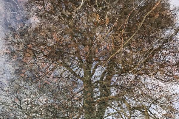 photo of a tree- credit: Elizabeth Hallam