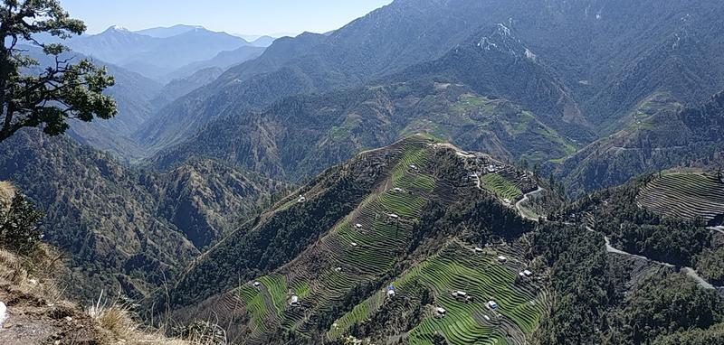 Terraced fields in Baitadi (K.P. Adhikari, 2020)