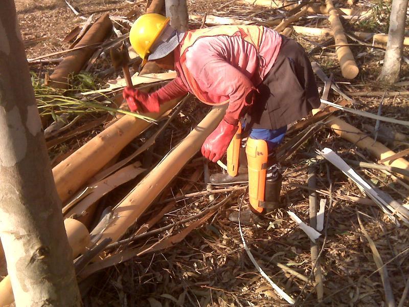 timber harvesting mtubatuba 2010